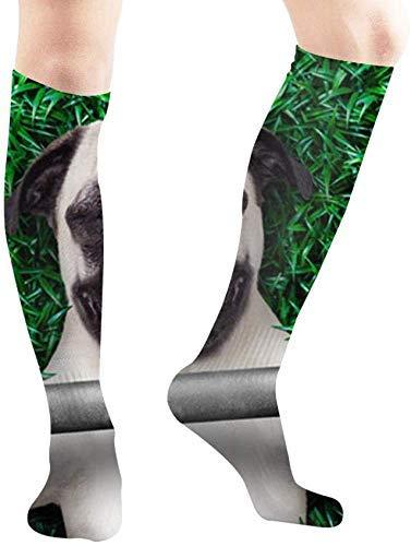 Calcetines deportivos para entrenamiento personal con animales y animales divertidos, para recreación y recreación, informales, para hombres y mujeres, viajes, fiestas, etc.
