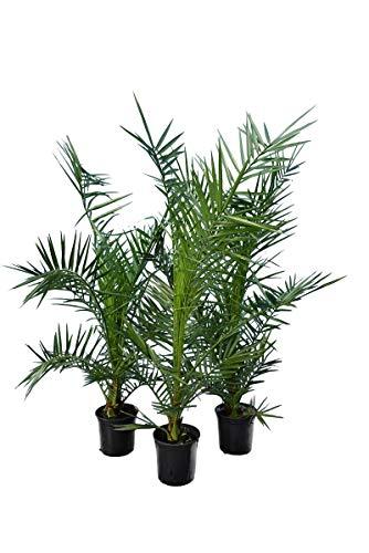 ikea palmboom