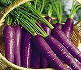 30pcs Semilla Zanahorias Orgánicas Semillas Vegetales Zanahoria Morada para Jardín Balcón Terraza (3)