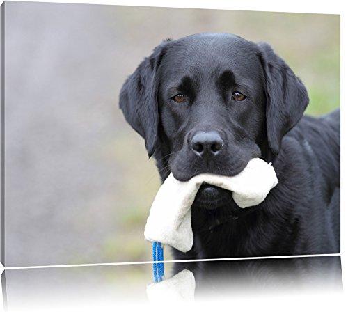 schwarzer Labrador mit Spielzeug Leinwand, XXL riesige Bilder fertig gerahmt mit Keilrahmen, Kunstdruck auf Wandbild mit Rahmen, günstiger als Gemälde oder Ölbild, kein...