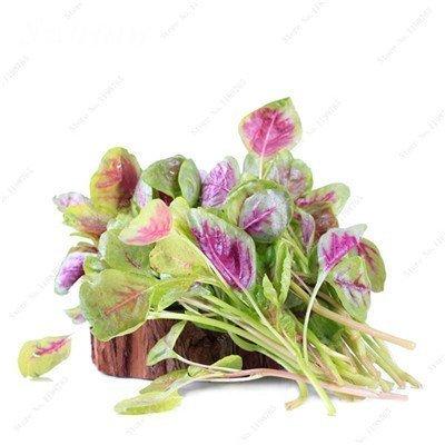 SwansGreen 9: Freies Verschiffen 50 PC Amaranthus Tricolor Samen Frühe Splendor Grassamen, seltene Pflanzensamen Topfpflanze Essbare Bonsai Gesunde 9