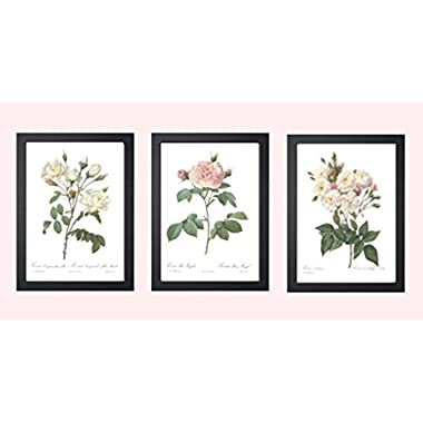 Ink Inc. Set of 3 Botanical Prints, White Home Decor, Redoute Roses, Unframed Wall Art 8x10 inch