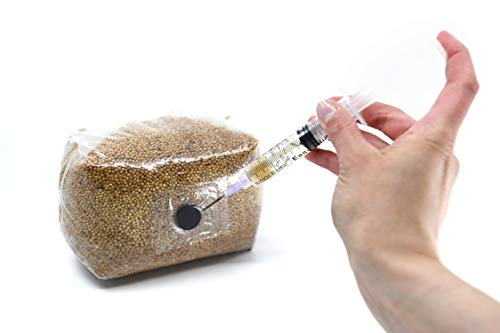 North Spore Sterilized Grain Bag with Injection Port (3lbs)   Home-Made Mushroom Spawn of Any Species   All You Need is a Spore Syringe (not Included)   Better Substrate Than Rye Berries (1)