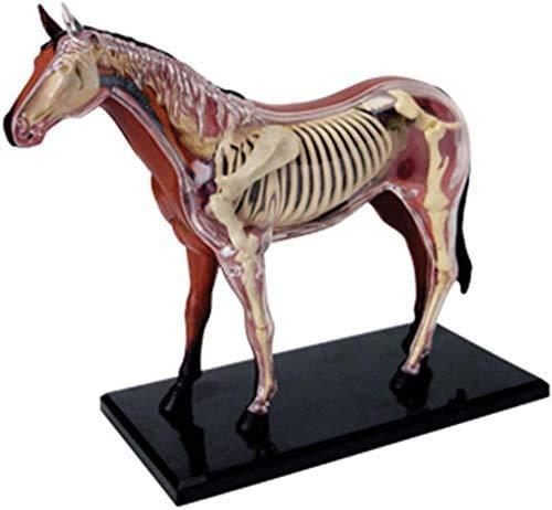 NHY Model 4D Vision Pferd Anatomie Modell,Horse Anatomy Model 4D Vision Human Anatomy, Puzzle Zusammenbau Spielzeug Tier Biologie Organ Medizinisch Unterrichtsmodell