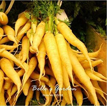 100pcs carotte Semences Rouge Bleu Jaune arc-en-Graines Légumes Jardin des Plantes Heriloom bio Daucus Carota Graines de Potager 08