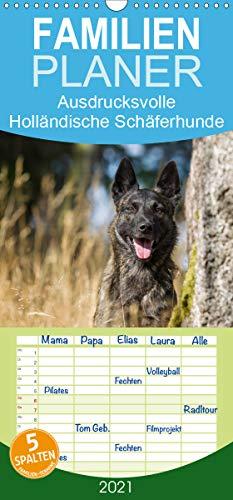 ausdrucksvolle Holländische Schäferhunde - Familienplaner hoch (Wandkalender 2021, 21 cm x 45 cm, hoch)