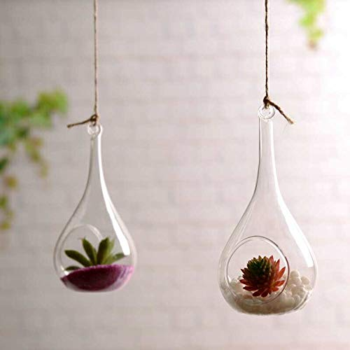 Jars used as glass terrarium