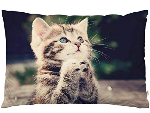 EKOBLA Throw Pillow Cover Cat Animal Kitty Little Cute Kitten Funny Lovely Pet Blue Brown Big Eyes Fashion Decor Lumbar Pillow Case Cushion for Sofa Couch Bed Standard Queen Size 20x30 Inch