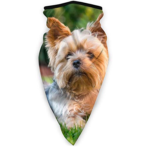 BJAMAJ Yorkshire Terrier Kleurplaten Outdoor Gezicht Mond Masker Winddicht Sport Masker Ski Masker Sjaal Bandana Mannen Vrouw