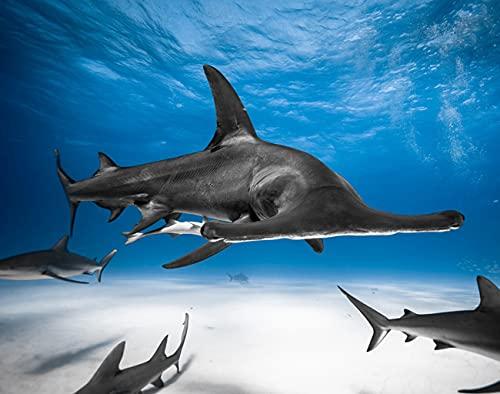 Y·JIANG Bahamas Pintura por números, Great Hammerhead Caribbean Reef Shark Escorts DIY lienzo acrílico pintura al óleo por números para adultos niños decoración de la pared del hogar, 40,6 x 40,6 cm