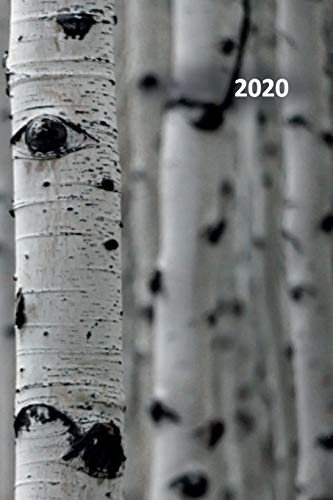 2020: Betula convenient Planner Calendar Organizer Daily Weekly Monthly Student for researching where do birch trees grow