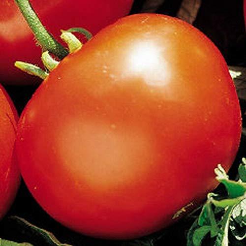 PLAT FIRM GRAINES DE GERMINATION: 50 - Graines: Tomate du Manitoba - Une tomate très tôt ancestrale!Tomates Tranchées Douces !!!