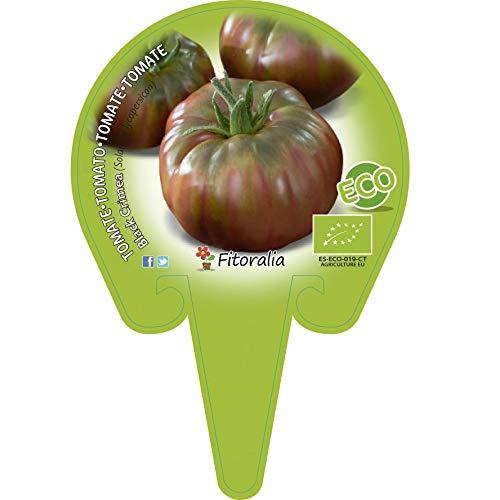 Plantón ecológico de Tomate Negro de Crimea maceta 10,5 cm de diámetro