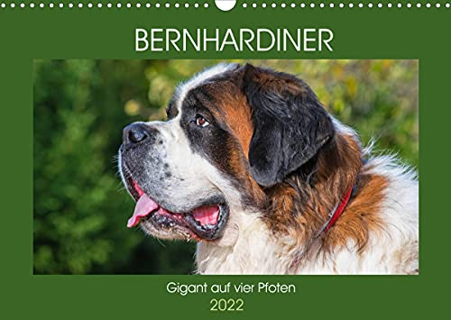 Bernhardiner - Gigant auf vier Pfoten (Wandkalender 2022 DIN A3 quer)