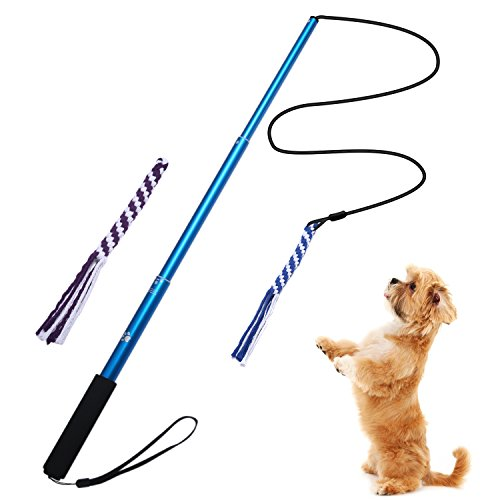 ANG『犬ロープ S』