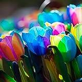 cioler seme di fiore- 100pcs semi di tulipano,rarità semi di bulbi da fiore giardino bulb semi di fiori colorati tulipani giardino fiore ornamentali