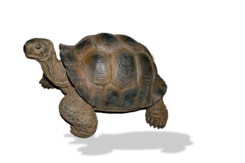 Vivid Arts tartaruga gigante resina ornamento (Dimensione Grande)