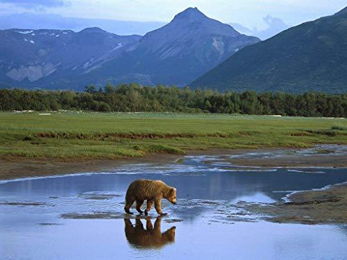 MAIYOUWENG Puzzel Für Erwachsene Klassische Puzzle 1000 Teile Lehrreiches Spielzeug - Grizzlybär, Der Nationalpark Alaska des Fluss-Katmai Kreuzt - Als Geburtstag Weihnachten Geschenk