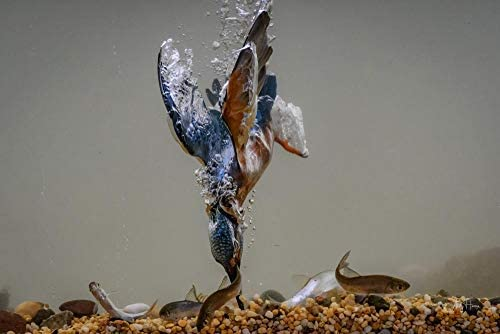 Vogels jagen op vis onderwater patroon puzzel legpuzzels voor volwassenen legpuzzel legpuzzel 500 stukjes