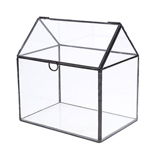 Baoblaze -   Glas Terrarium,
