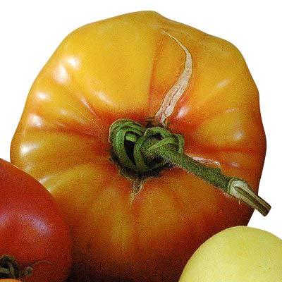 Tomate - Vieil allemand - 10 graines '' Old variété '' ** Tomates pesant jusqu'à 1 kg **