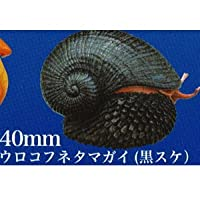 ネイチャーテクニカラーMONO PLUS 深海生物 ボールチェーン&マグネット [7.ウロコフネタマガイ(黒スケ)](単品)