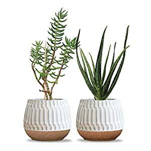 Silk Flower Arrangements Carlton Lane Valencia - Ceramic Indoor Flower Pots for Plants – Indoor Garden Planters with Drainage Holes – Set of 2 - Beautiful Small Plant Pots - White