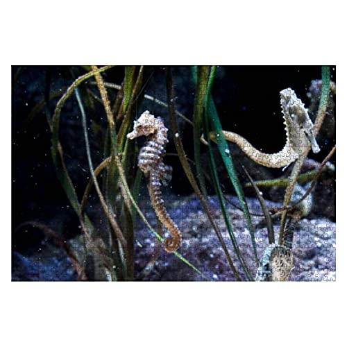 1000 Stück Hippocampus Seepferdchen Aquarium Meerwasser Aquarium Fische Lager großes Stück Puzzle für Erwachsene Lernspielzeug für Kinder Kreative Spiele Unterhaltung Holzpuzzles Home Decor