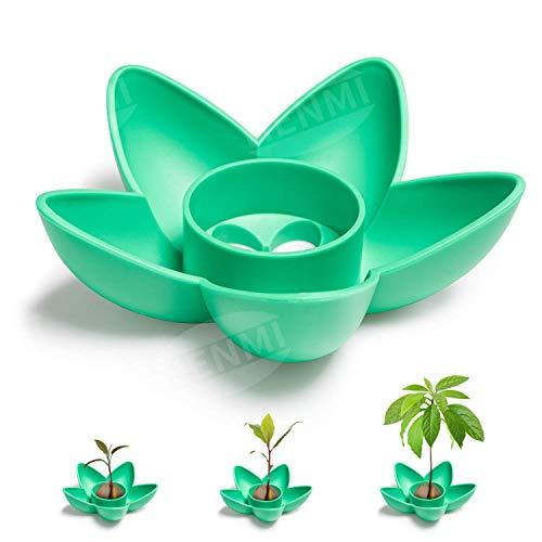 HENMI Kit de crecimiento del árbol de semillas de aguacate Kit de crecimiento del árbol de aguacate, Adecuado para plantar regalos de semillas de balcones interiores/huertos