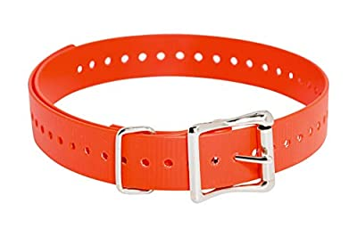 SportDOG Brand 1 Inch Collar Strap, Orange by SportDOG Brand