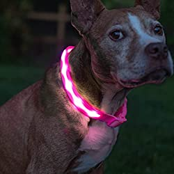 Blazin' Safety LED Collar for dogs.