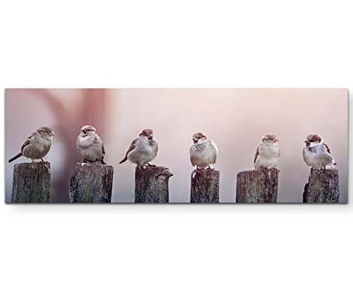 Paul Sinus Art Leinwandbilder | Bilder Leinwand 120x40cm Spatzen auf einem Holzzaun