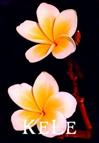 Nouvelles Graines fraîches! 20PCS / BAG Plumeria Graines, rares graines de fleurs exotiques Graines Egg Flower