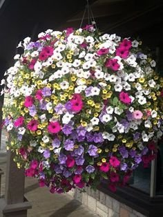 BloomGreen Co. Graines de fleurs: Jardin Phlox Graines mixtes pour le jardinage jardin [jardin Graines Eco paquet] Graines de plantes