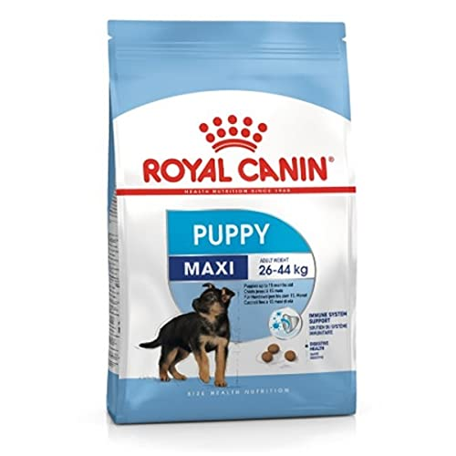 Royal Canin Maxi Junior, 1er Pack (1 x 10 kg Beutel) - Hundefutter