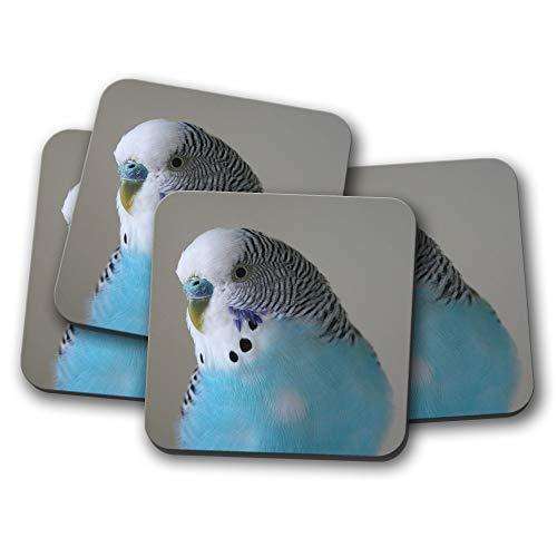 """Blue Budgie Parrot Pet Bird Small Photograph 6/"""" x 4/"""" Art Print Photo Gift #14623"""