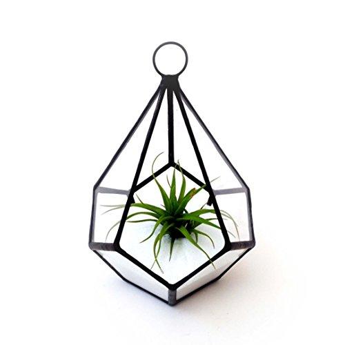Verre Fleur Chambre Moderne Int/érieur Ouverture Tenture Verre G/éom/étrique Terrarium Poly/èdre Diamant Teardrop Forme Pot