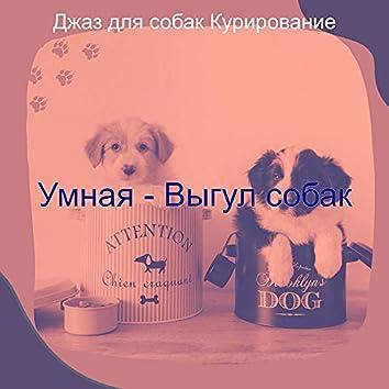 Умная - Выгул собак