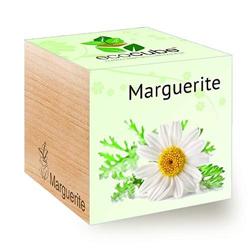 Feel Green Ecocube Marguerite, Idée Cadeau (100% Ecologique), Grow-Your-Own/Kit Prêt-à-Pousser, Plantes Dans Des Cubes En Bois 7.5cm, Produit En Autriche