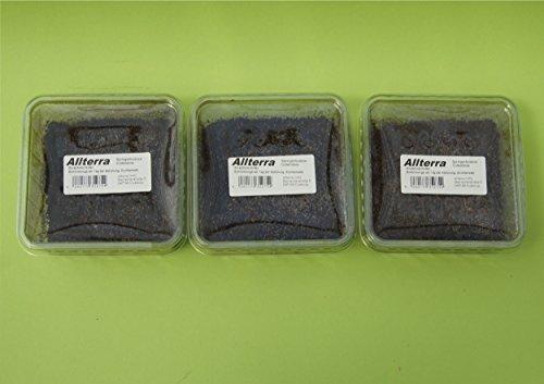 Allterra Tropische Springschwänze 3 Dosen, Collembola in 500 ml Dose, Zuchtansatz