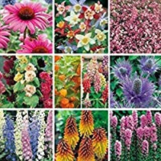 12 Hardy Perennial//Biennial Medium Plug Plants Collection Ready to Pot UP//Plant Out
