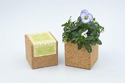 Grow Cube aimanté (Pensée)
