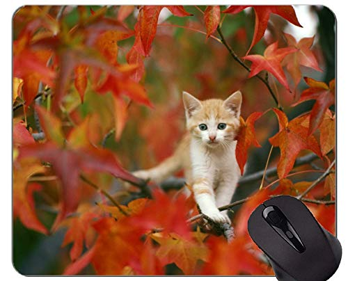 Spiel-Mausunterlage Gewohnheit, Baby-Tierkätzchen verlässt Katzenherbst rutschfeste Gummibasis Mousepad