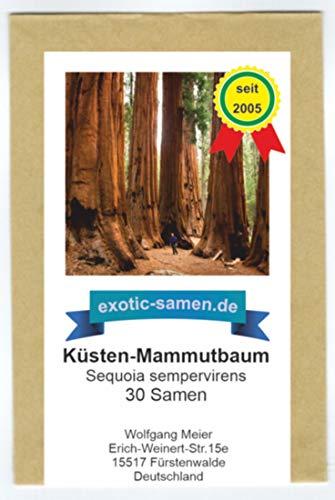 Sequoia sempervirens - Küsten-Mammutbaum - 30 Samen