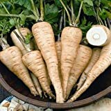 Hollow Crown Parsnip Seeds | Vegetable Seeds for Planting Outdoor Gardens | Heirloom & Non-GMO | Planting Instructions Included (3 Grams Approx. 300 Seeds)