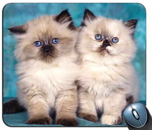 Kätzchen-Paar-Hintergrund-Mausunterlage, rutschfeste Gummibasis der Spiel-Mausunterlage, personalisierte Mausunterlage für Computer u. Laptop