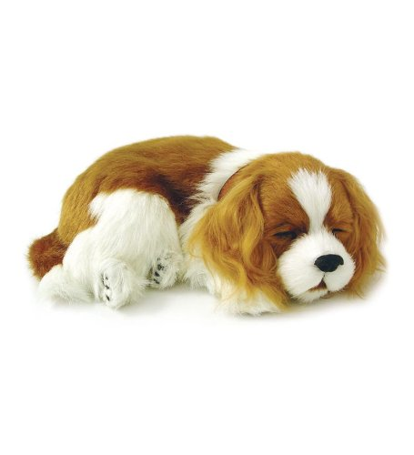 Wind & Weather Perfect Petzzz Cavalier King Charles Puppy