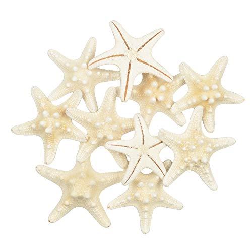 Yixuan 10PCS Estrellas de mar Estrella de mar Natural Estrella de mar Decoracion Molde Estrella mar decoración de Bodas/Fiesta temática en la Playa/Decoraciones para el hogar/Bricolaje