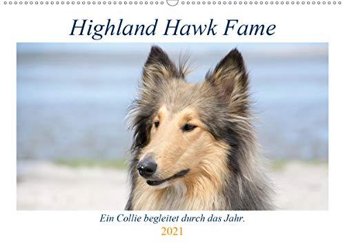 Highland Hawk Fame - Ein Collie begleitet durch das Jahr (Wandkalender 2021 DIN A2 quer)