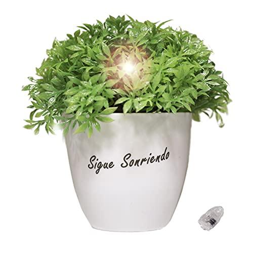 Planta Artificial con Luz Led Pequeña y Mensaje Escrito Maceta Decoración Regalos Originales...